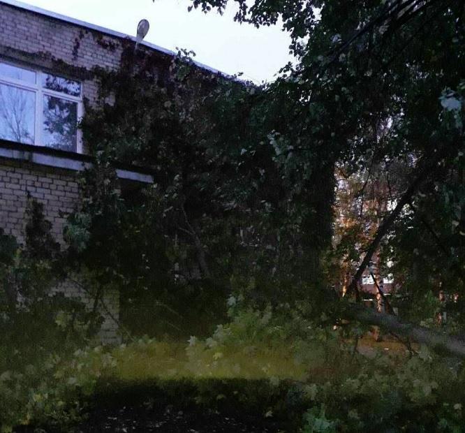 В Ярославле на детский сад упало дерево