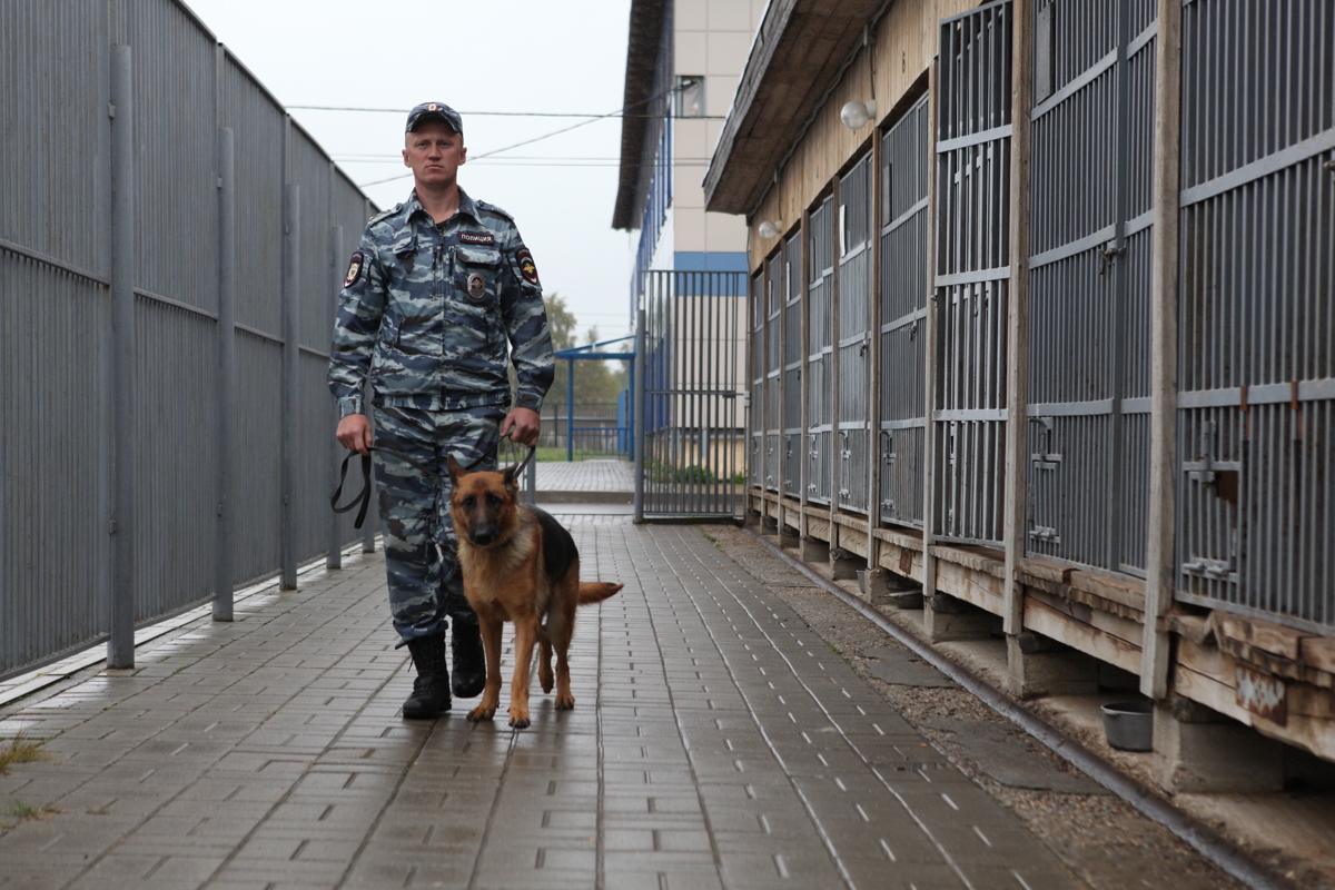 Зверь – гроза криминала. Собака помогла задержать изувера-насильника, напавшего на девушку в Ярославле