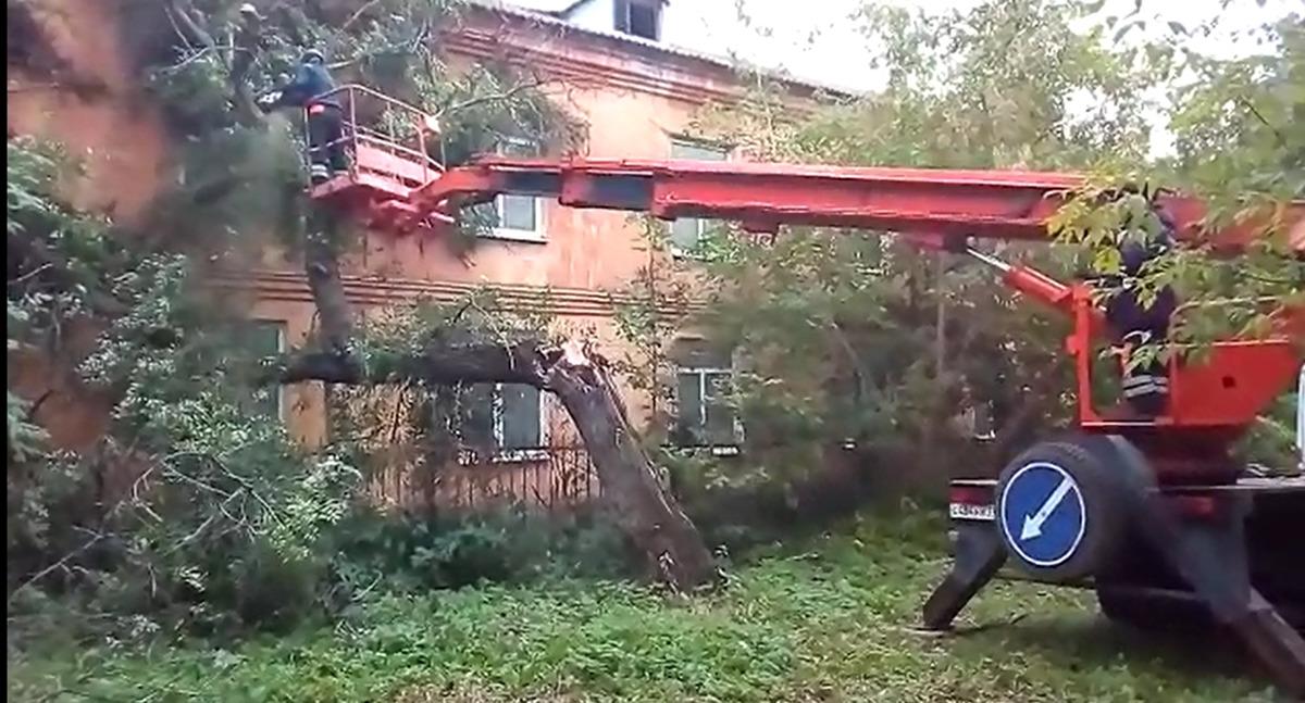 В Ярославле огромное дерево упало на детское учреждение: видео