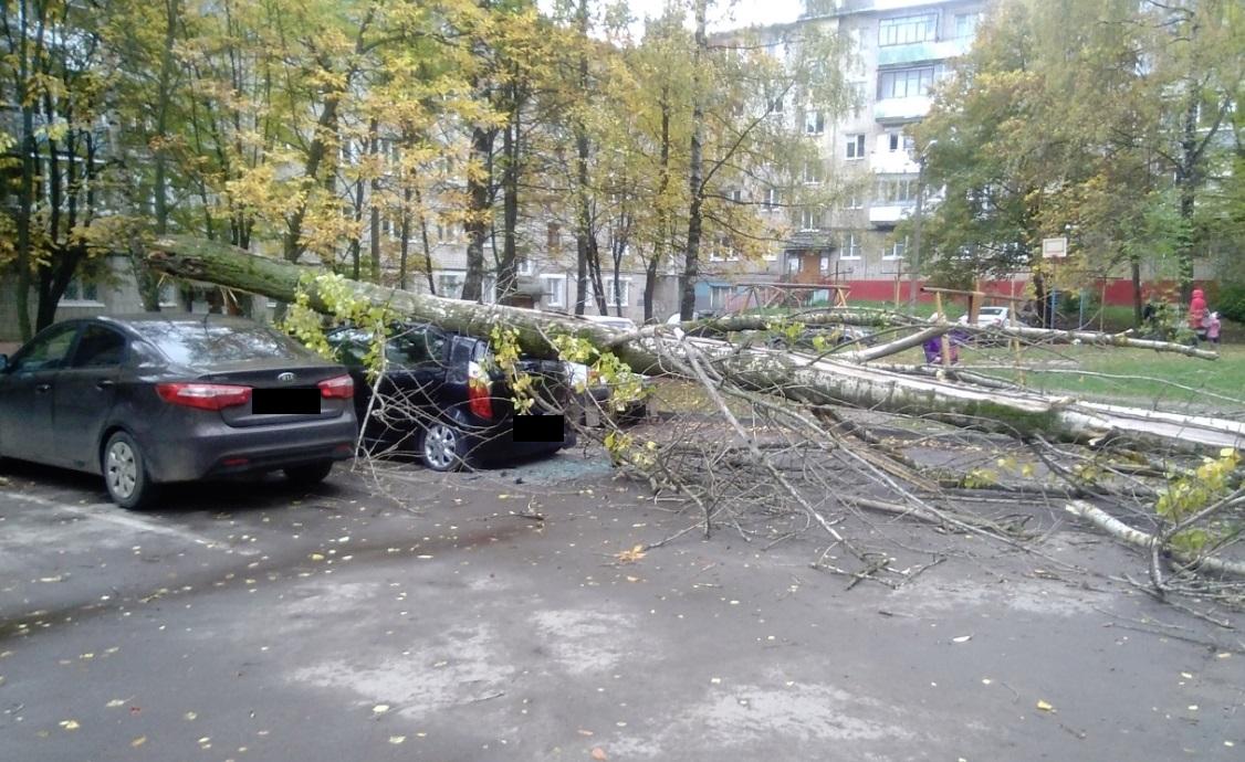 В ярославском дворе рядом с детской площадкой огромное дерево упало на иномарку