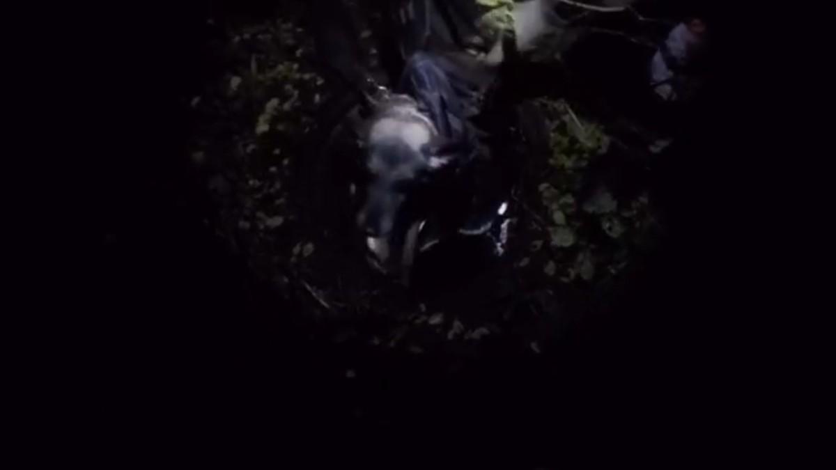 Ярославские спасатели вытащили собаку из канализации: видео