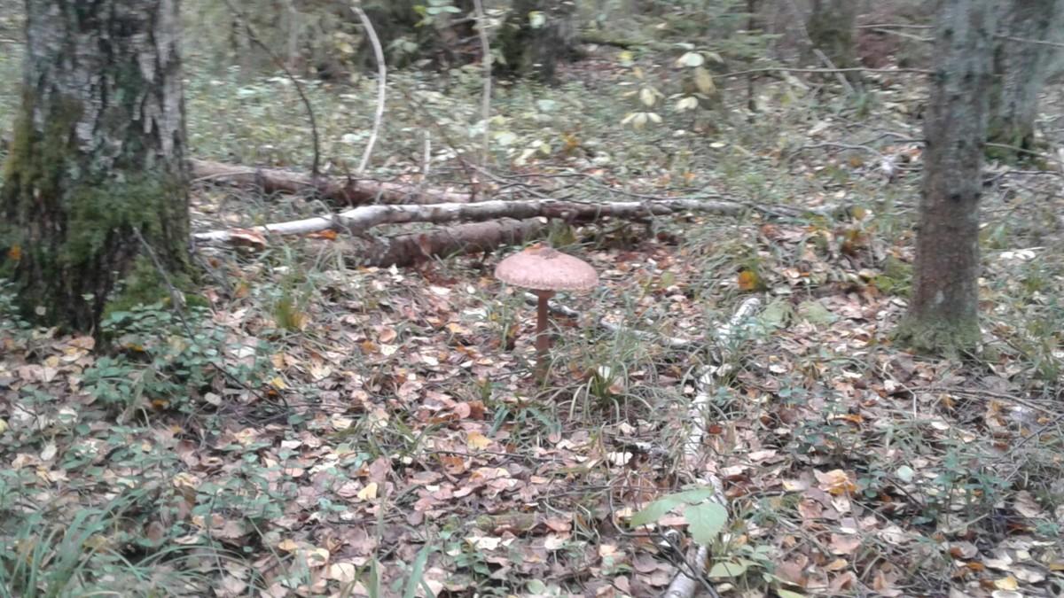 В Ярославской области целые сутки искали заблудившихся грибников