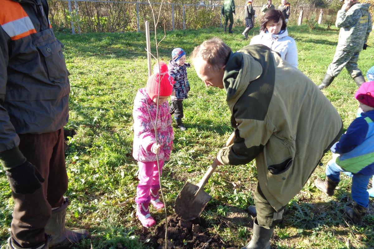 В рамках экологической акции «Живи, лес!» в регионе уже высажено около 37 тысяч молодых деревьев
