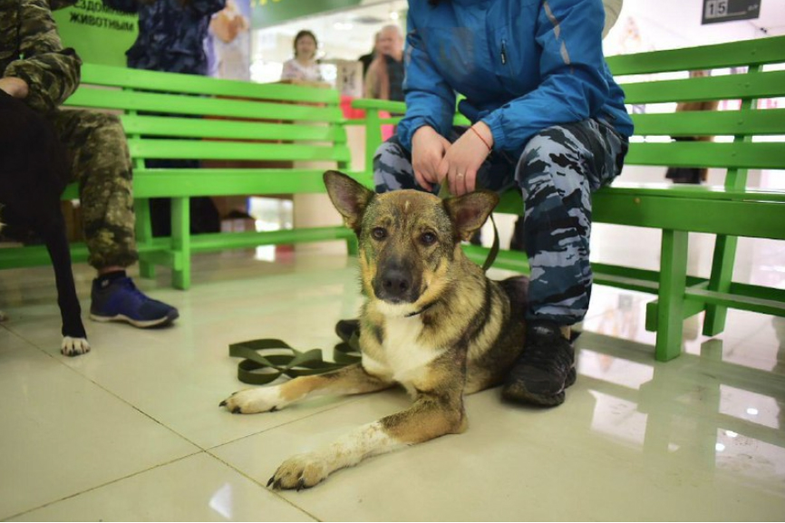 В Ярославле на выставке 30 бездомных животных обрели хозяев