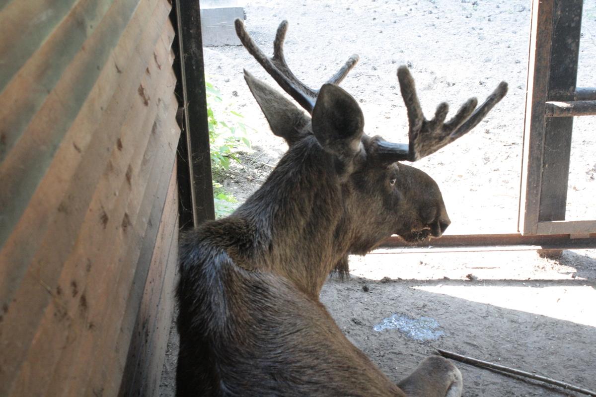 Под опекой енот и кенгуру. У обитателей Ярославского зоопарка появились шефы