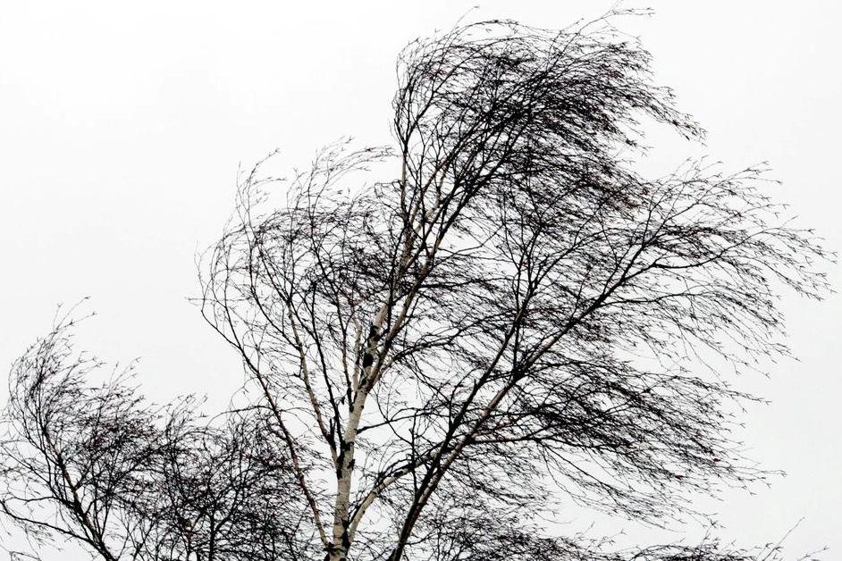 МЧС обнародовало экстренное предупреждение в связи с усилением ветра