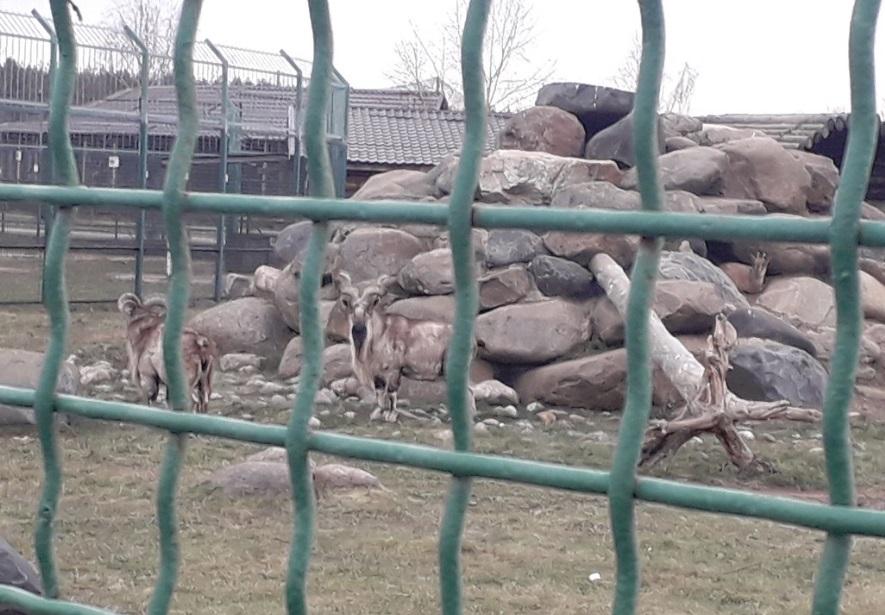 Кенгуру и винторогая коза поселились в вольерах Ярославского зоопарка: фото