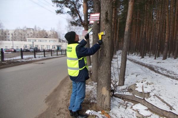 В Ярославской области компании заплатят штрафы до полумиллиона рублей за рекламу на деревьях