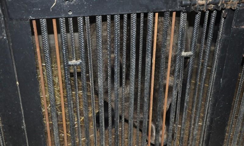 В Ярославском зоопарке братья-медведи впали в спячку