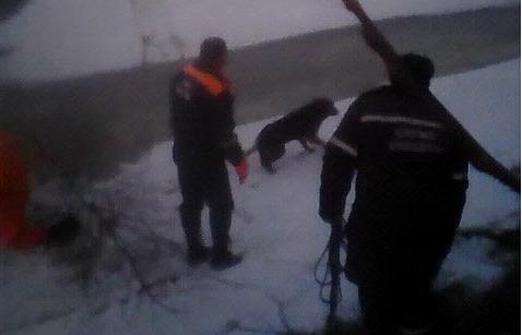 В Ярославле тонущая собака укусила спасателя, вытаскивавшего ее из воды