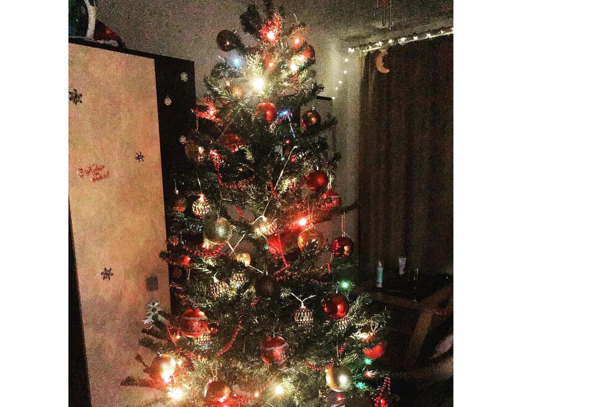 Ярославцы рассказали, какую елку поставят на праздники