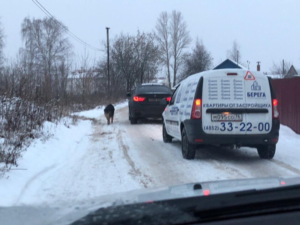 Благодаря ярославцам депутат облдумы нашел пропавшую собаку