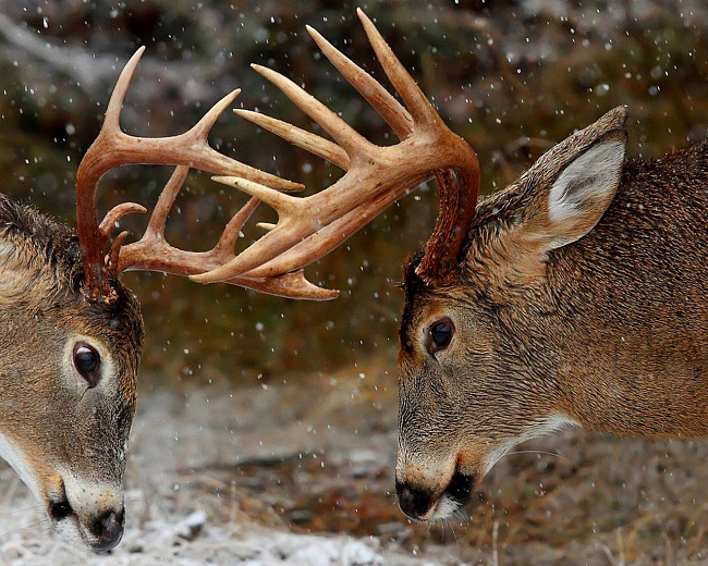 В Ярославле объявлена акция «Подари елку зоопарку»