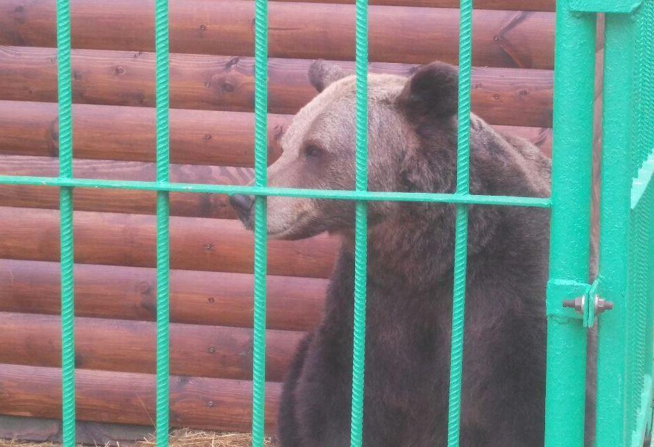 В Ярославле медведица Маша впала в спячку