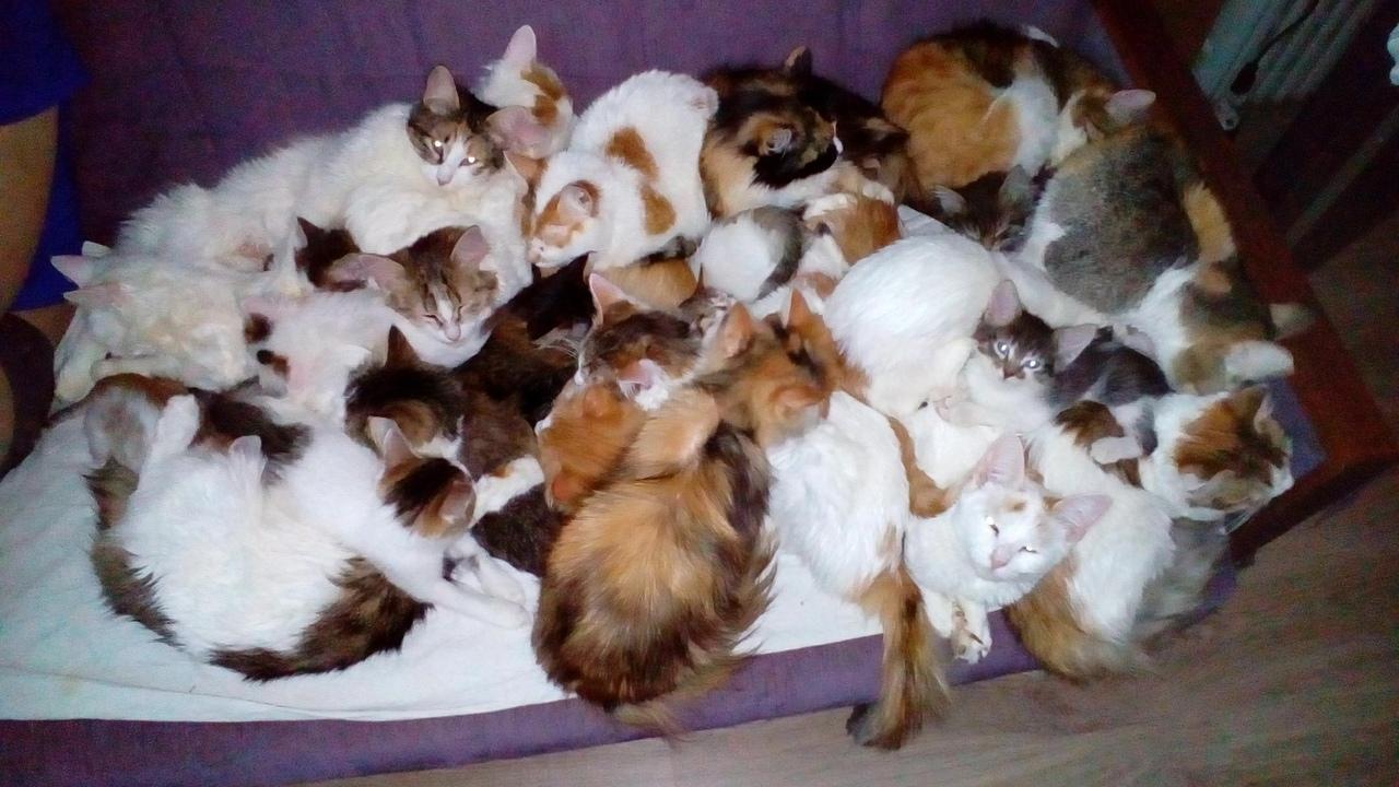 Ярославцы нашли мешок с 20 кошками и приютили питомцев