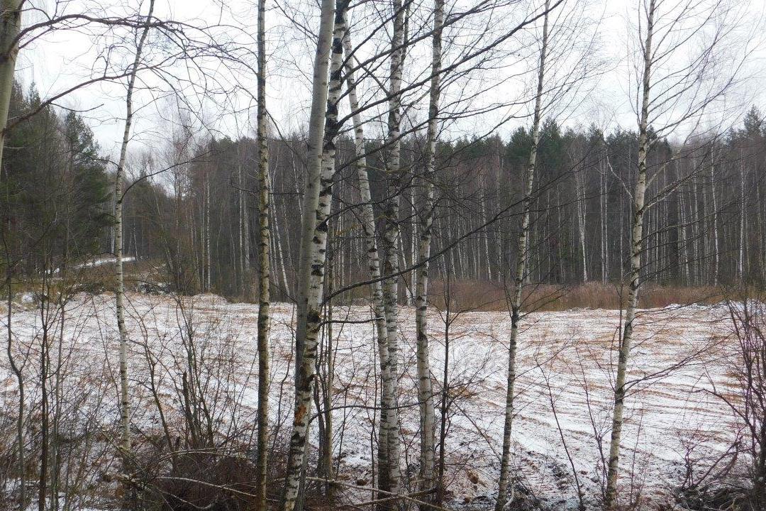 За год в Ярославской области ликвидировано больше тысячи несанкционированных свалок