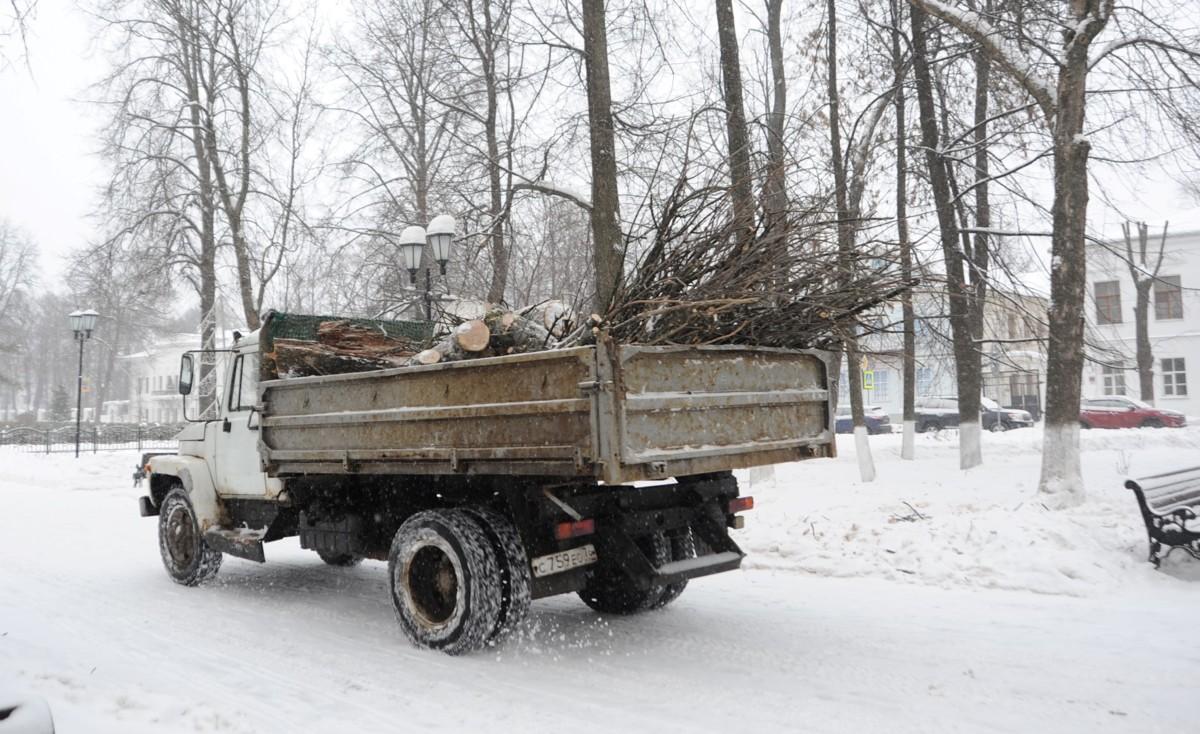 В Демидовском сквере в Ярославле спиливают столетние липы