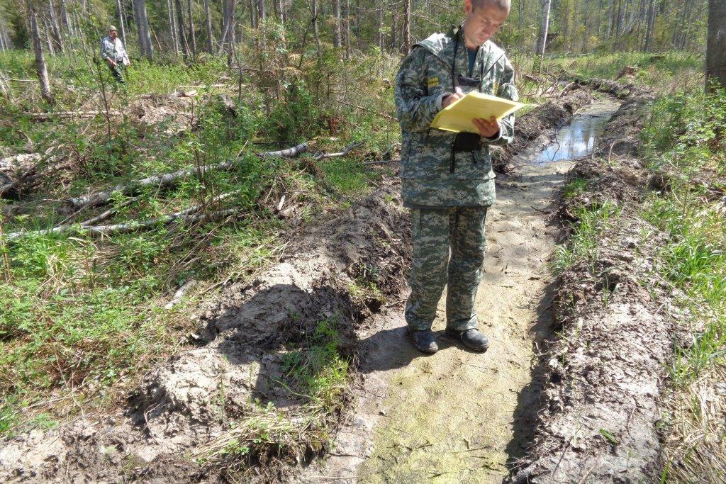 За год за пользование лесами Ярославской области в федеральный и региональный бюджеты поступило 250 миллионов рублей