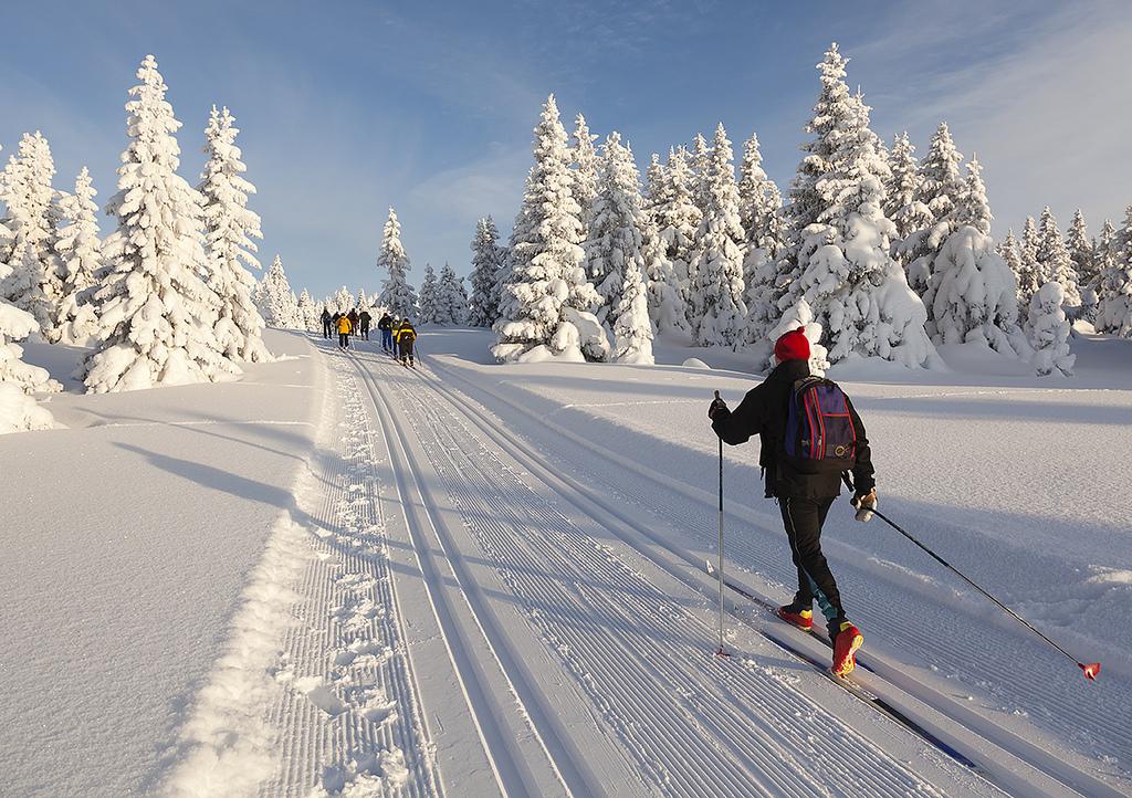В Ярославской области состоится лыжный экозабег