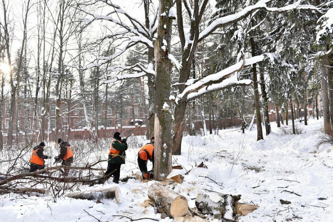 В парке в Норском опиливают аварийные деревья