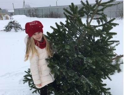 Ярославцы после праздников передали в зоопарк полтысячи живых елок