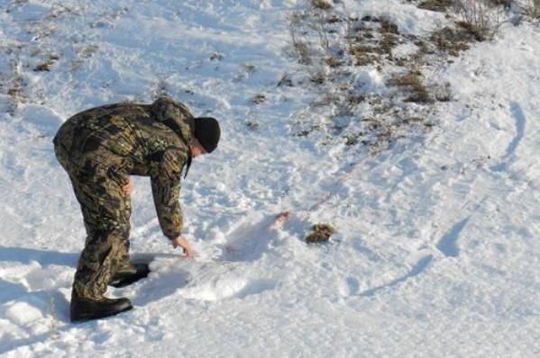 Десять жителей региона лишились охотничьих билетов за нарушения законодательства в сфере охоты