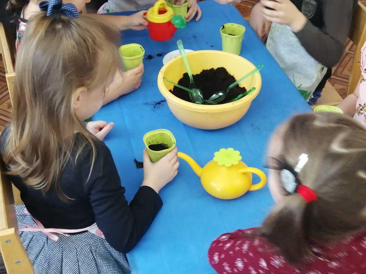 Ярославские ребята сами выращивают растения на занятиях по экологии
