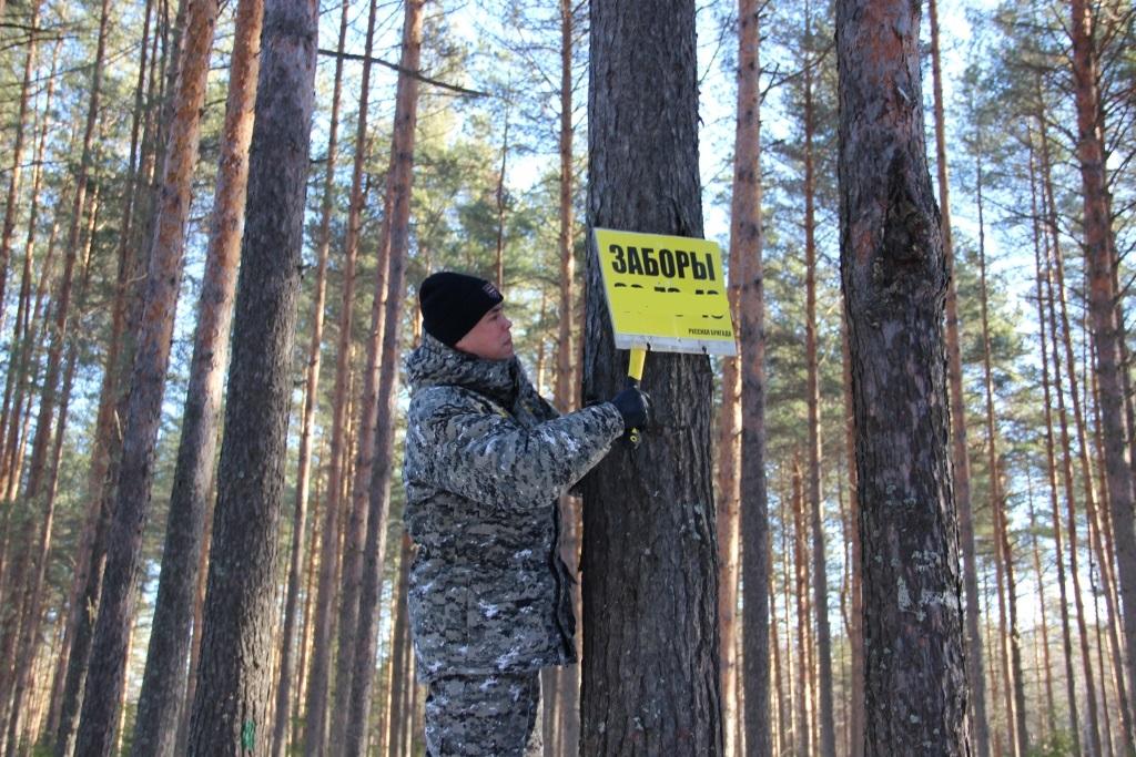 С начала года в лесах Ярославской области демонтировано около 100 незаконных рекламных конструкций