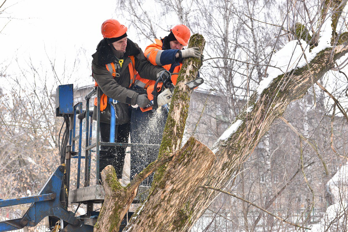 В Ярославле спилили 100 аварийных деревьев