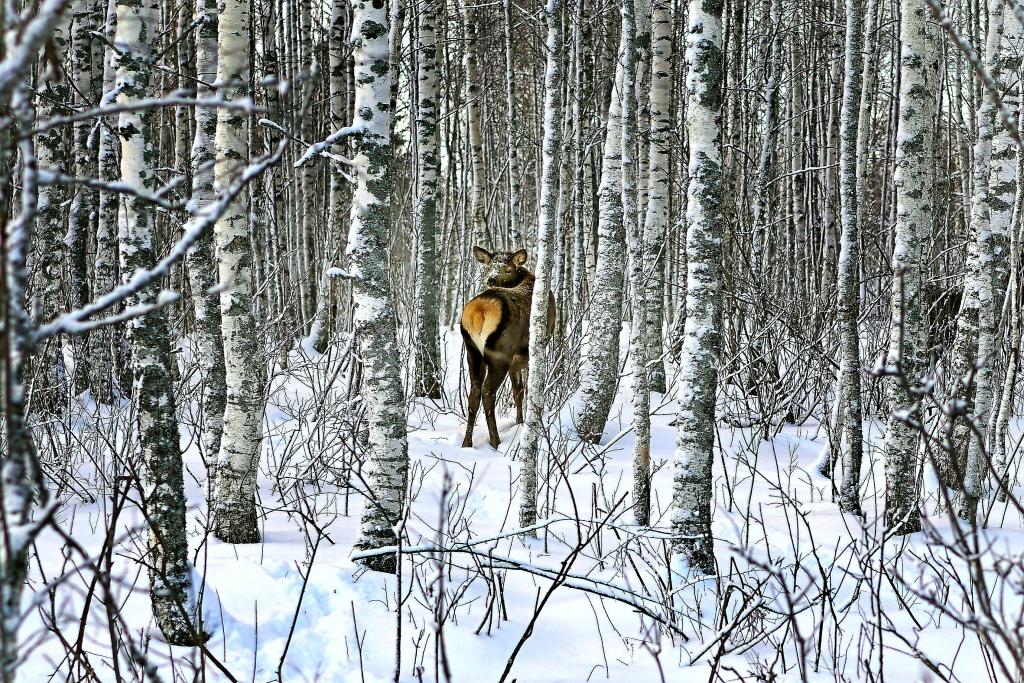 В Ярославской области завершился сезон зимней охоты
