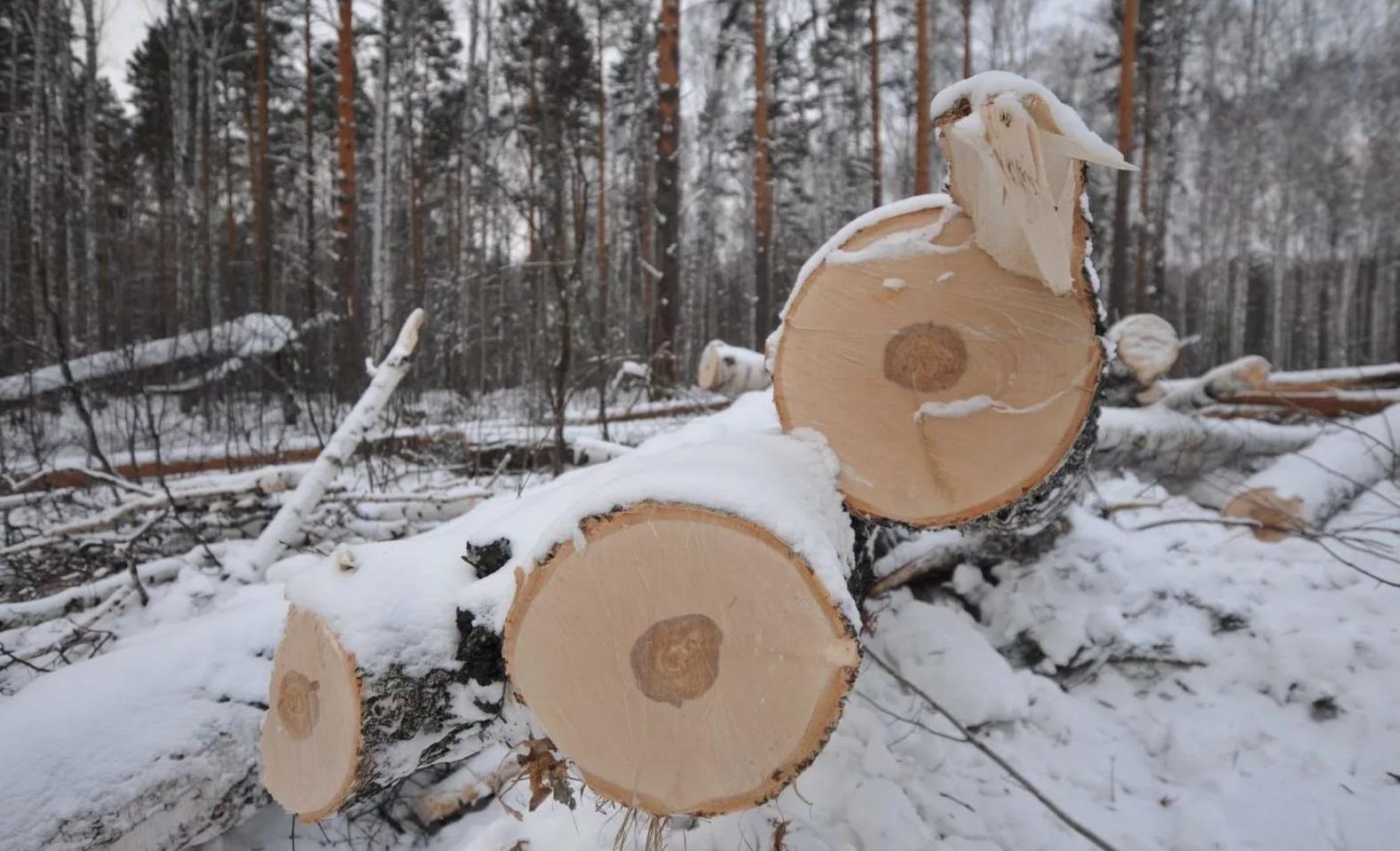 В Ярославской области «черные лесорубы» повалили деревьев более чем на миллион рублей