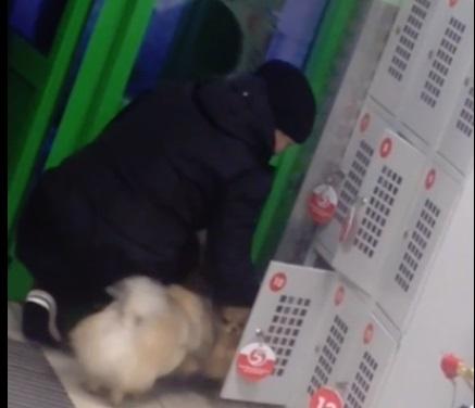 В рыбинском магазине покупательница закрыла трех собак в ячейке для хранения вещей: видео