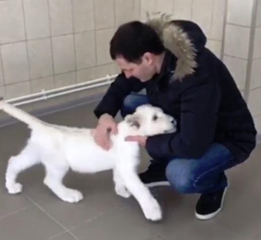 Мэр Ярославля Владимир Волков поиграл с маленькой львицей Лавиной: фото