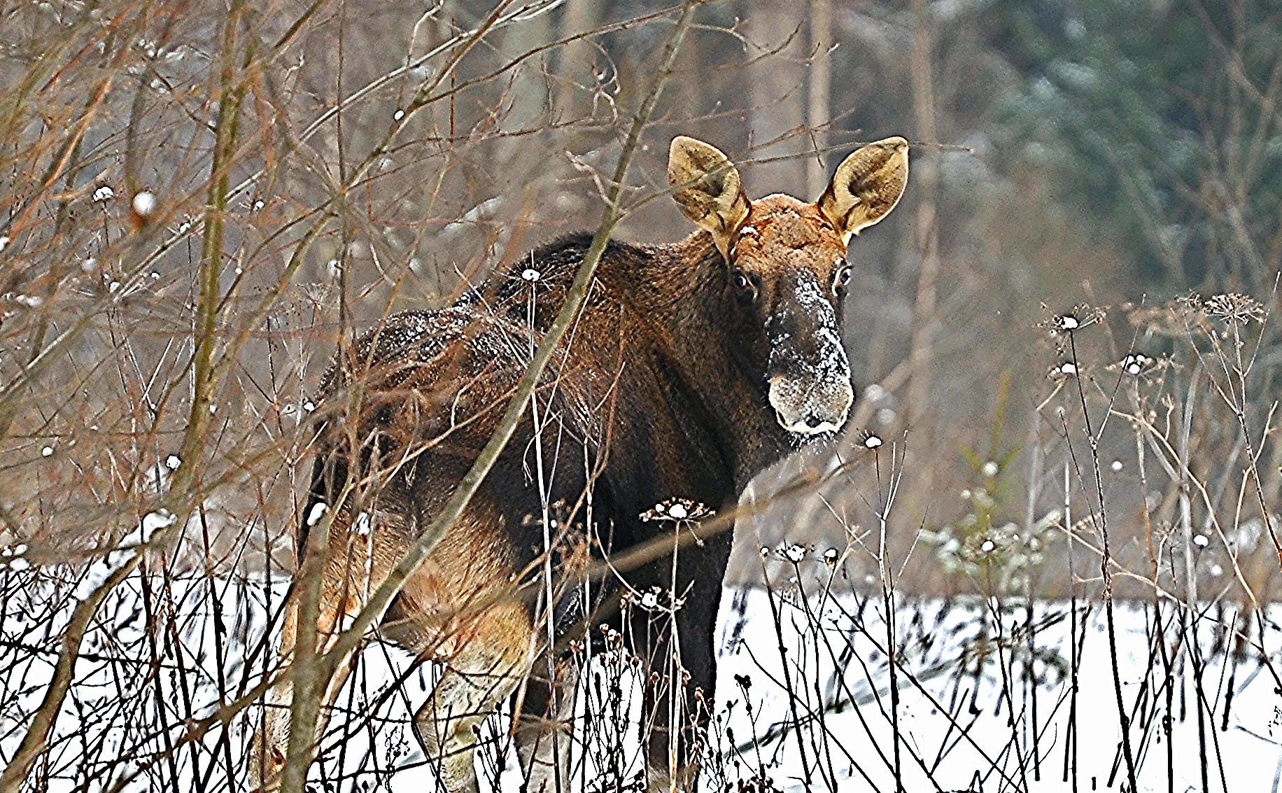 Для иммунизации диких животных в лесах разложат 700 тысяч доз вакцины против бешенства