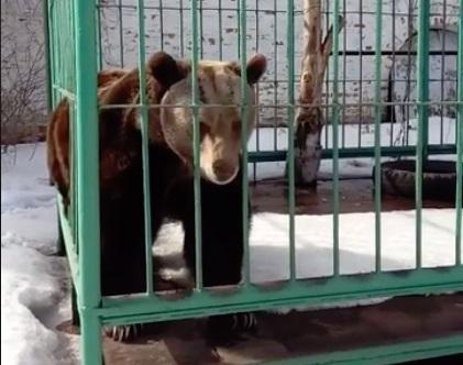 В Ярославле после зимней спячки проснулась медведица Маша