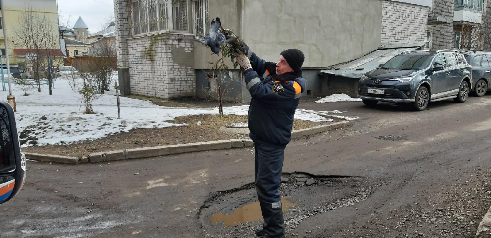 «Птичку жалко»: в Ярославле сотрудники ЦГЗ спасли голубя, попавшего в беду