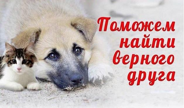 В Ярославле пройдет акция по раздаче бездомных животных