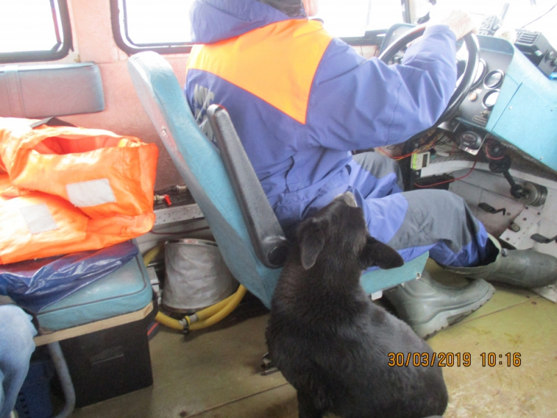 В Ярославле спасли собаку, плывшую на льдине по реке
