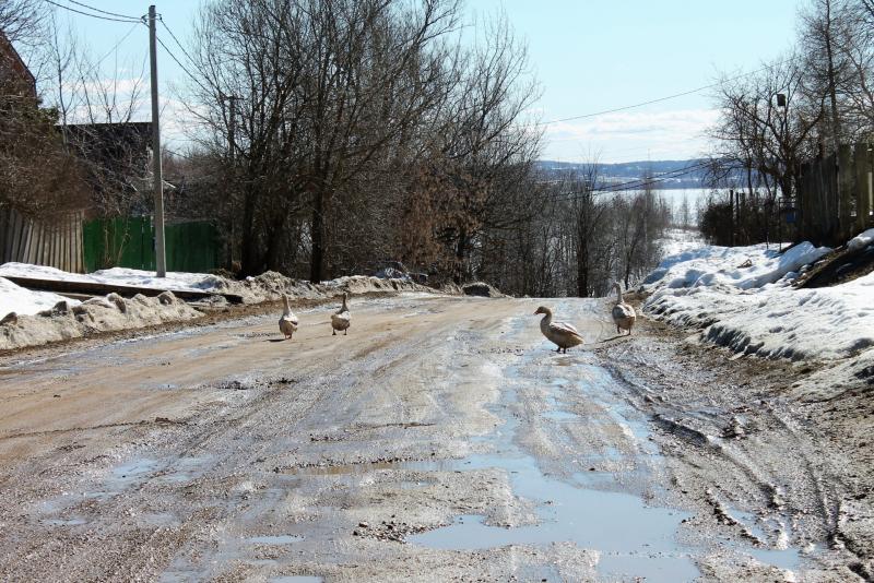 Школьники из Переславского района вынуждены ездить на учебу на такси