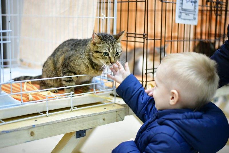 С начала года волонтерам удалось найти дом для 100 безнадзорных животных