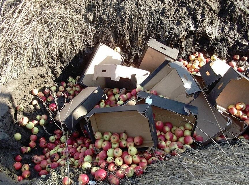 Под Ярославлем раздавили почти 400 килограммов санкционных яблок