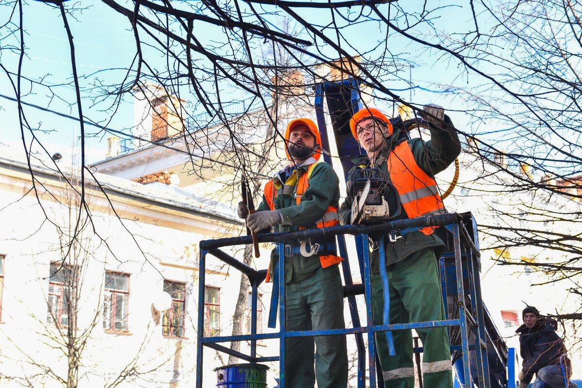 В Ярославле начались работы по облагораживанию деревьев