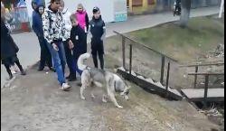 В Ярославле дети спасли собаку на пруду