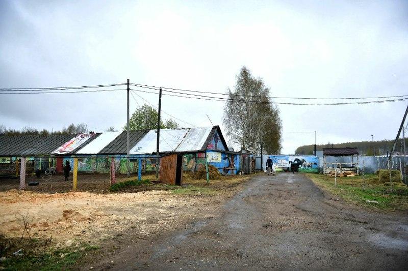 В центре Ярославля чиновники проверили у лошадей паспорта