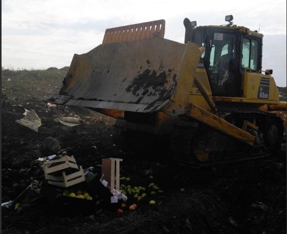 Более 180 килограммов санкционных фруктов и овощей раздавили и сожгли под Ярославлем