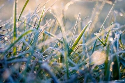 МЧС: в выходные в Ярославской области ожидаются заморозки