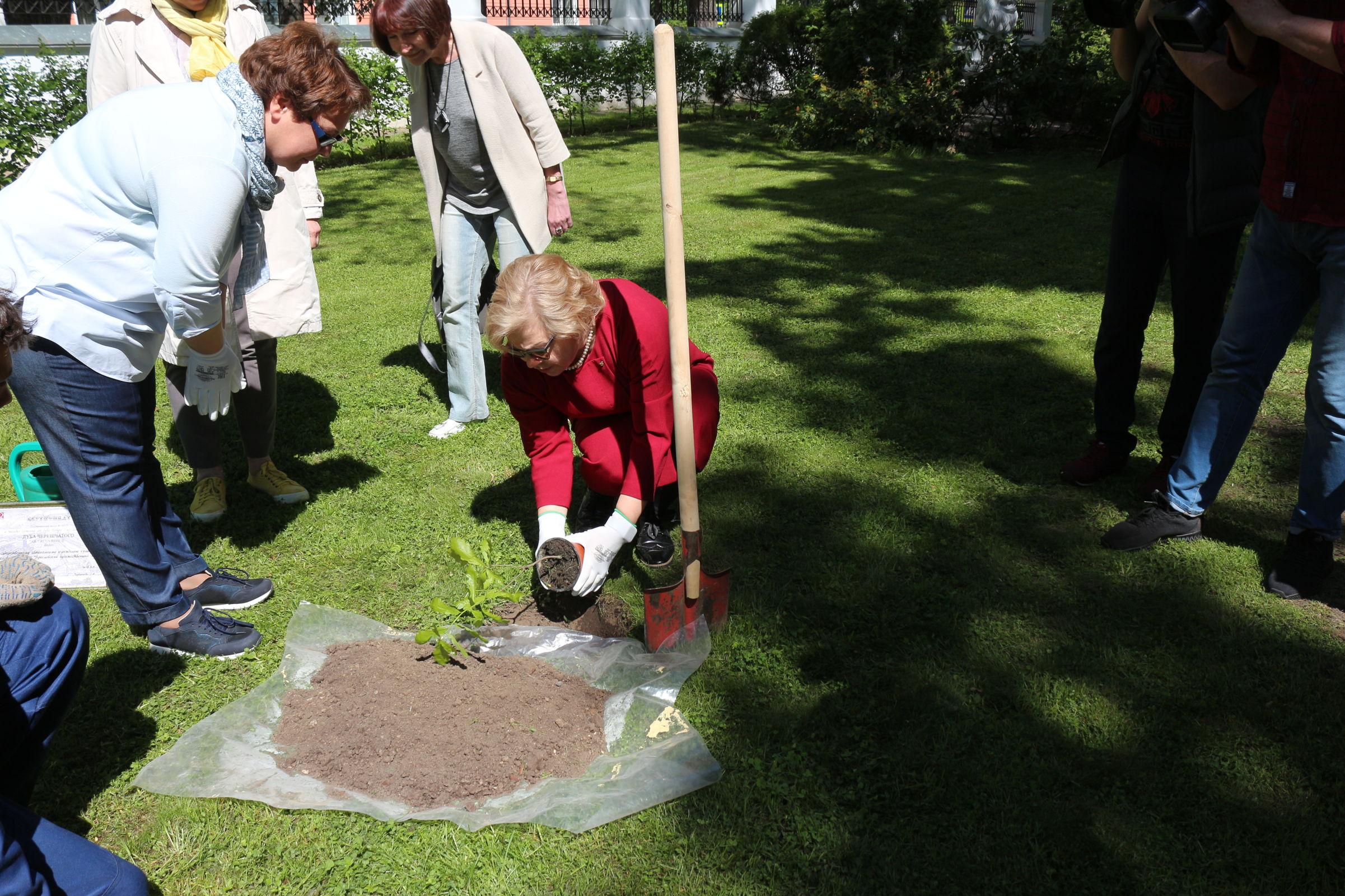 В Ярославском художественном музее посадили дубок Петра Великого