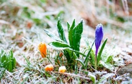 МЧС: в Ярославской области ждут заморозки