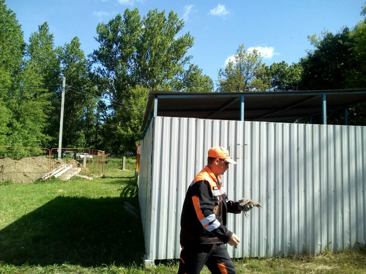 В Ярославле мужчинам пришлось спасать выпавших из гнезда на крыше детсада птенцов чайки