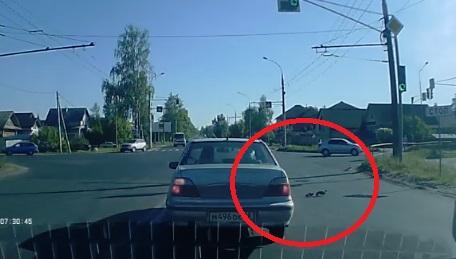 В Рыбинске водители остановили движение, чтобы пропустить утиное семейство: видео